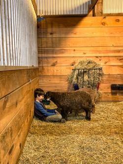 kid and lamb meet up