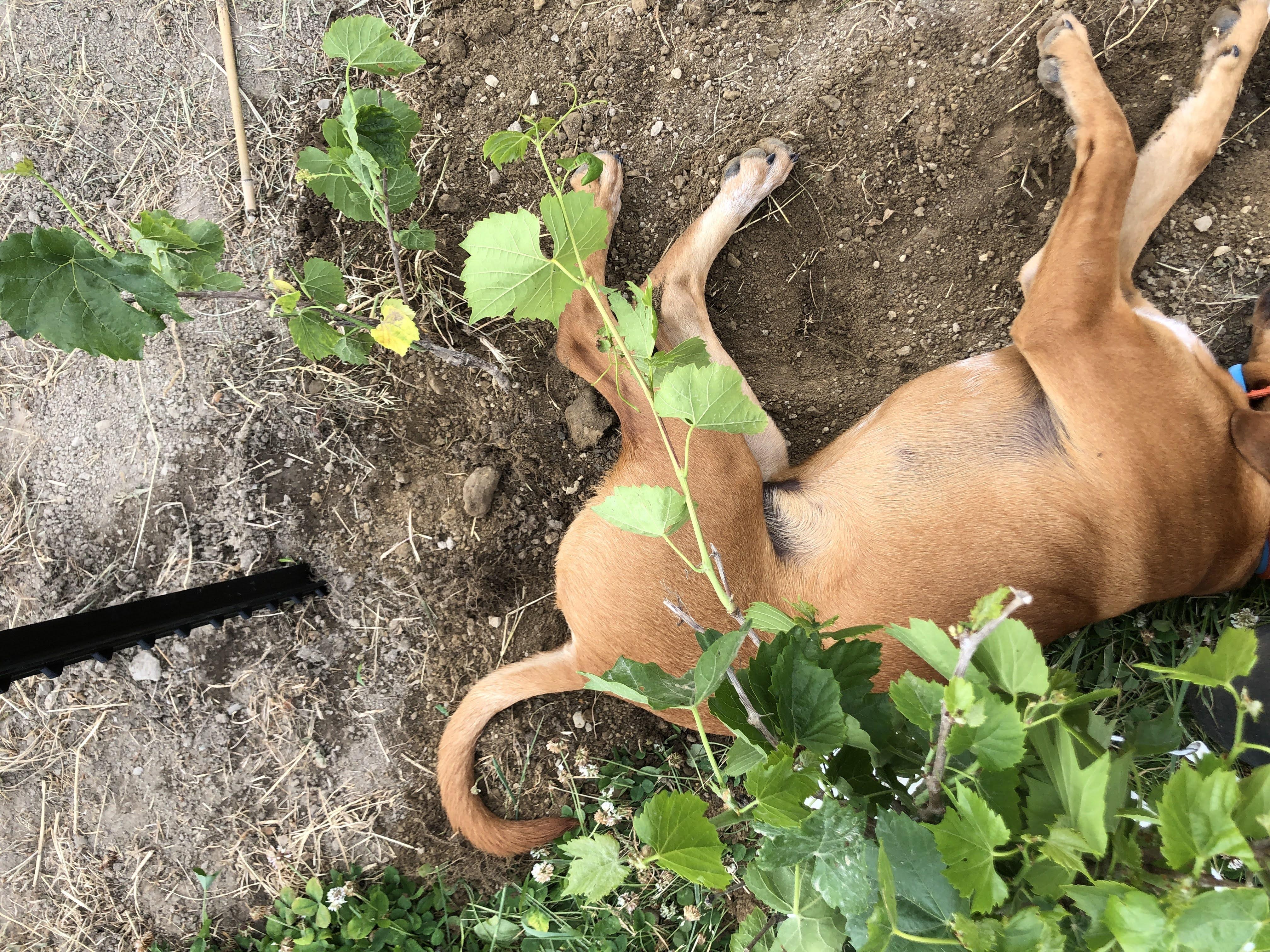 grape and dog