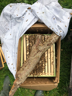 swarm install