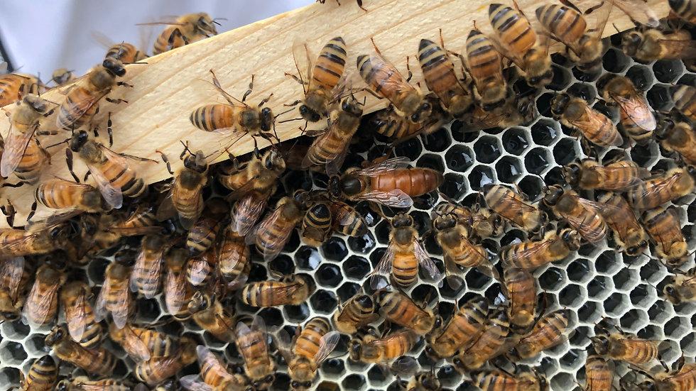 September 24 : Bee Keeping 101