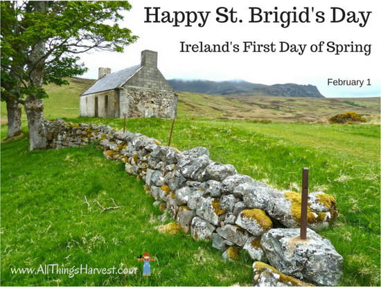 Saint Brigid of Kildare or Brigid of Ireland