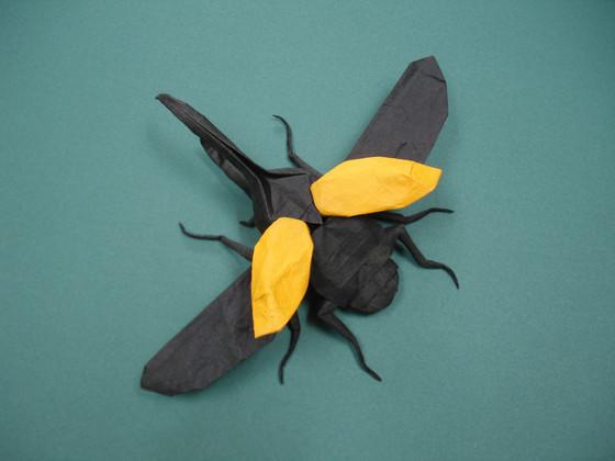 Flying Hercules Beetle