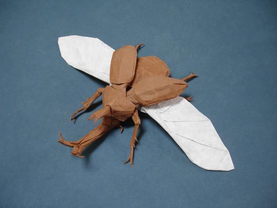 Samurai Helmet Beetle (Kabutomushi)