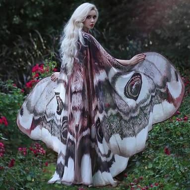Ailes de papillon de nuit