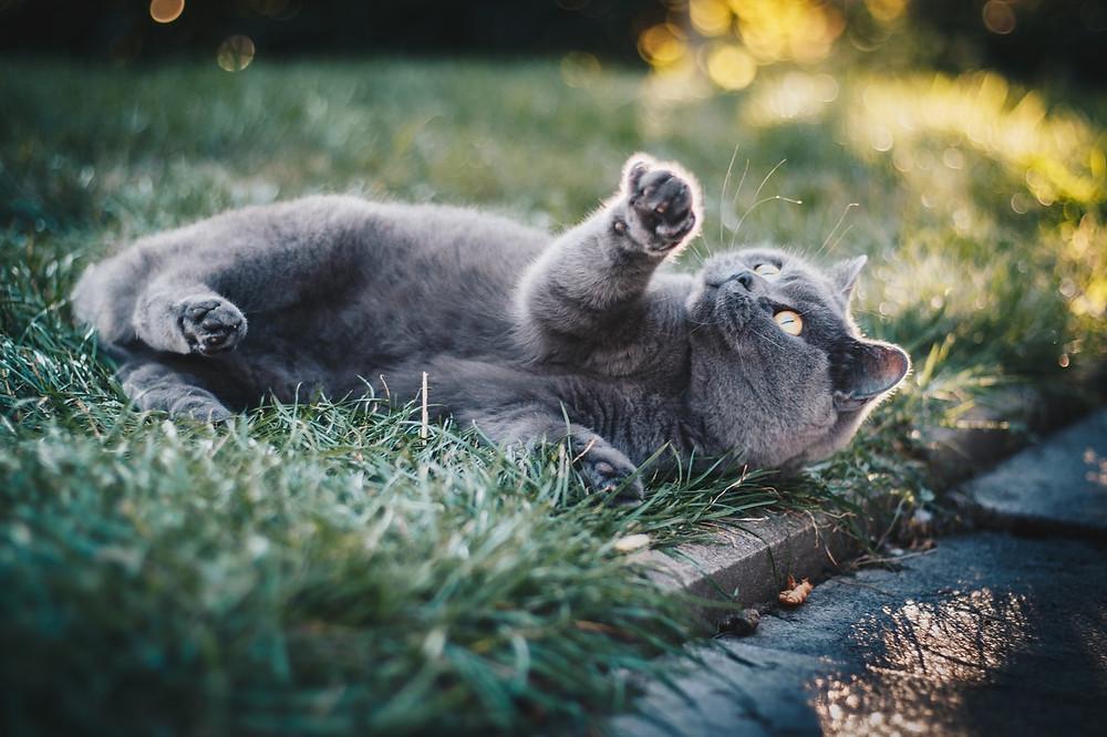 แมว, บำบัดซึมเศร้า