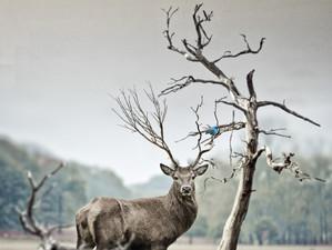 เมื่อธรรมชาติล่มสลาย : ในยุคสมัยการสูญพันธุ์ครั้งที่ 6