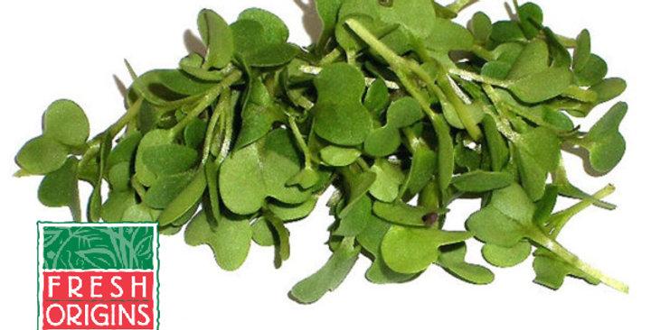 Microgreens (Mustard, Dijon™)