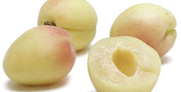 Apricots (White)