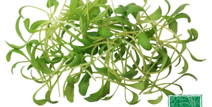 Microgreens (Cress, Pepper)