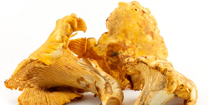 Mushrooms (Chanterelle)