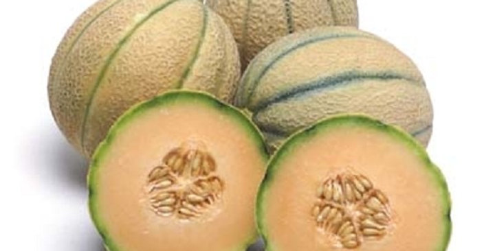 Melons (Tuscan)