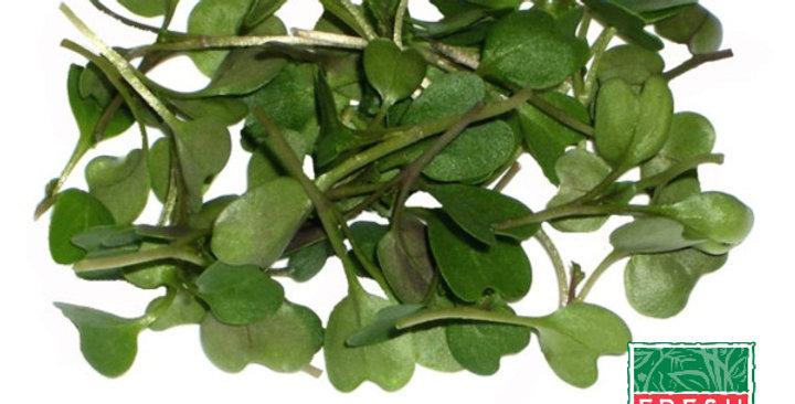 Microgreens (Kale, Tuscan™)