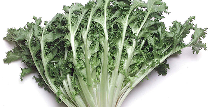 Chicory (Curly Endive)