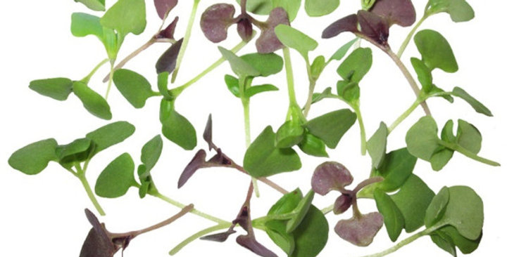 Microgreens (Basil Mix™)