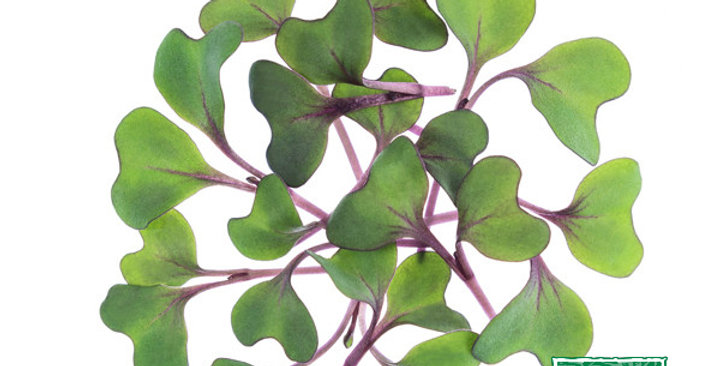 Microgreens (Cabbage, Red)