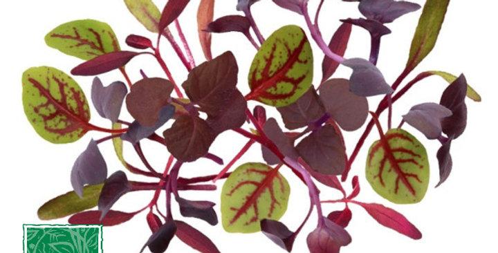 Microgreens (Merlot Mix™)