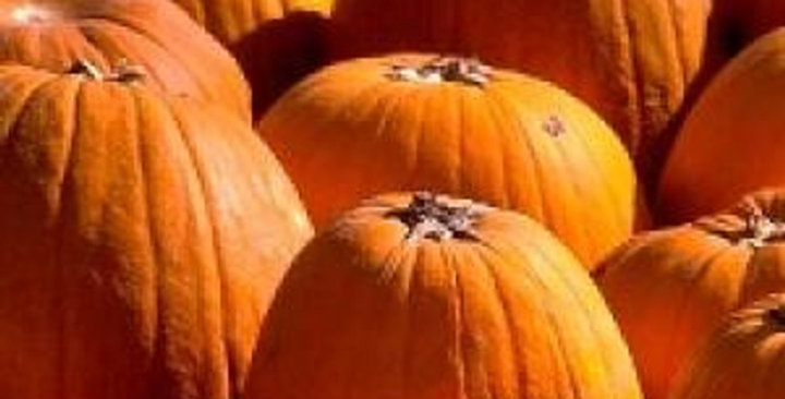 Ornamental Pumpkins (Big Mack)