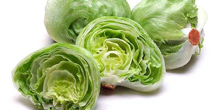 Baby Lettuce (Iceberg)
