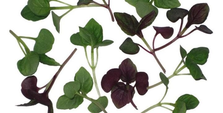 Microgreens (Shiso, Mix)