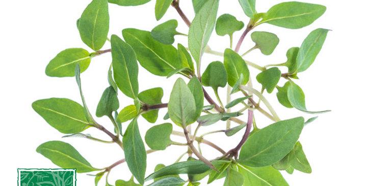 Microgreens (Basil, Thai)