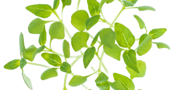 Microgreens (Basil, Lemon)