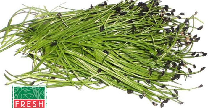 Microgreens (Chives)