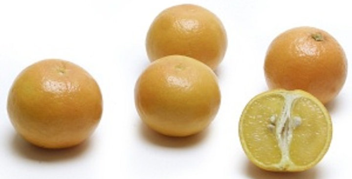Organic Tangerines (Orlando)
