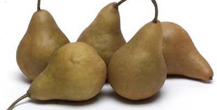 Organic Pears (Bosc)
