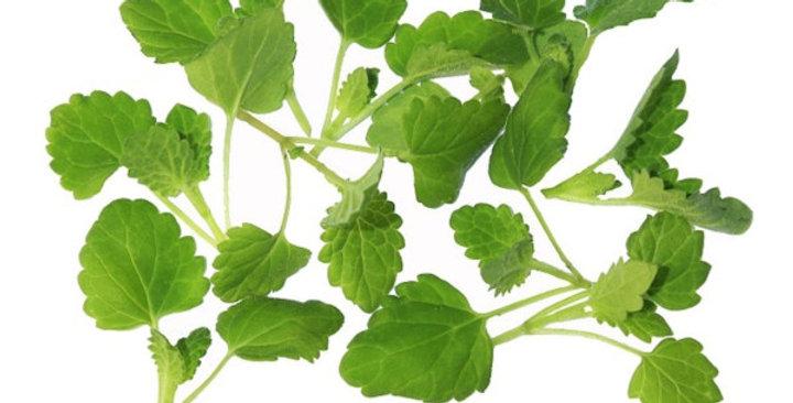 Microgreens (Mint, Lemon™)