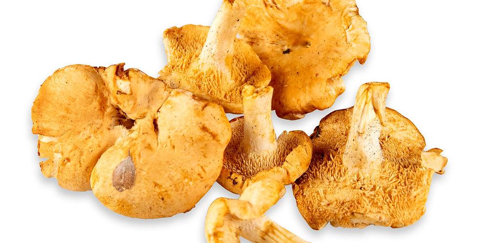 Mushrooms (Hedgehog)