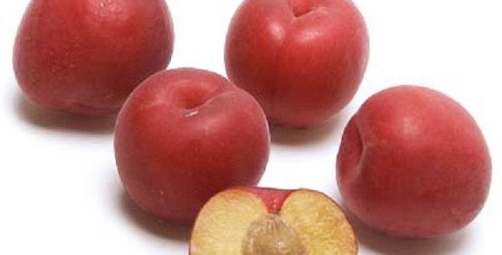 Apricots (Red Velvet™)