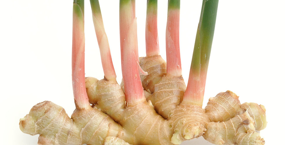 Ginger Root (Young)