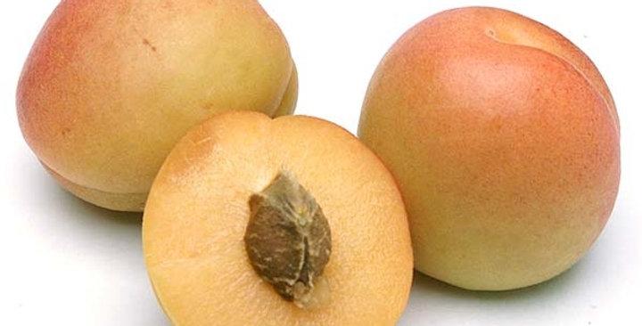 Organic Apricots (Assorted Varieties)