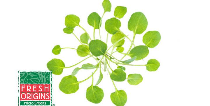Microgreens (Cress, Upland)