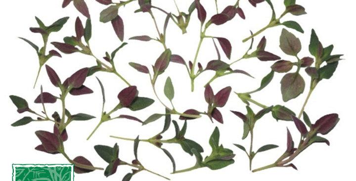 Microgreens (Thyme)