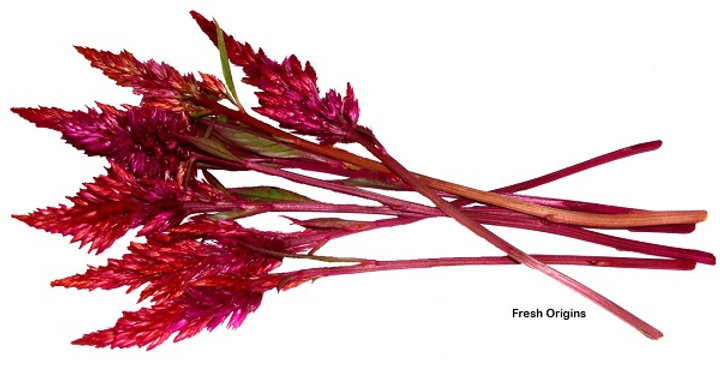 Edible Flowers (FireStix™)