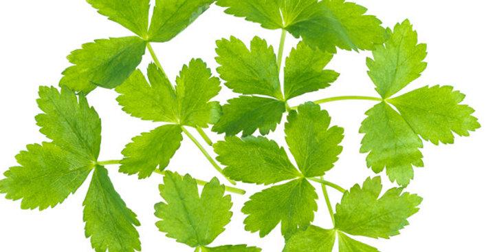 Microgreens (Mitsuba™)