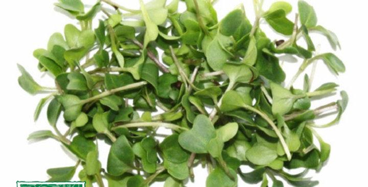 Microgreens (Rapini™)
