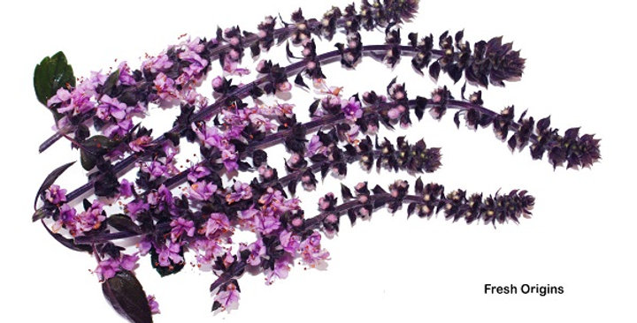 Edible Flowers (Basil Blossom)