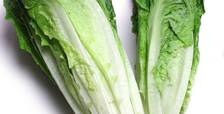 Organic Lettuce (Romaine Hearts)