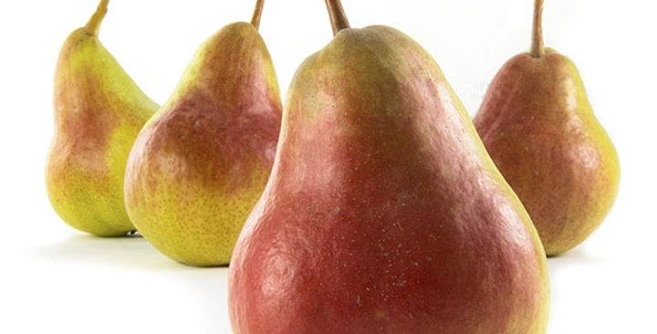 Pears (Flamingo)