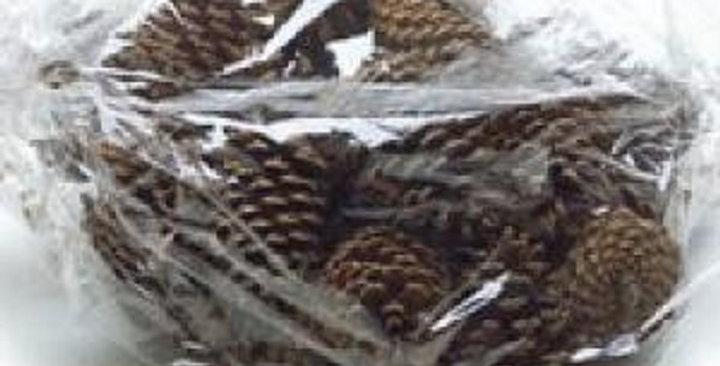 Ornamental Pine Cones (Ponderosa)