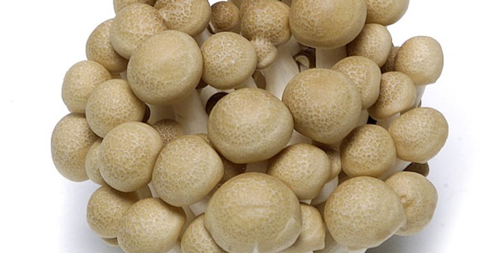 Mushrooms (Hon Shimeji, Brown)