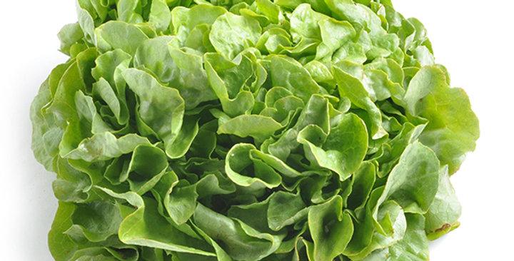 Organic Lettuce (Butter)