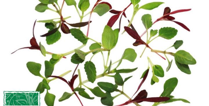 Microgreens (Sweet Spice Mix™)