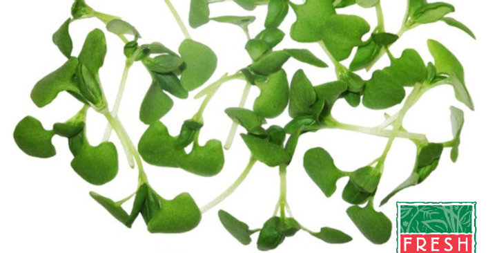 Microgreens (Basil, Italian)