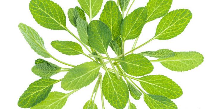 Microgreens (Sage)