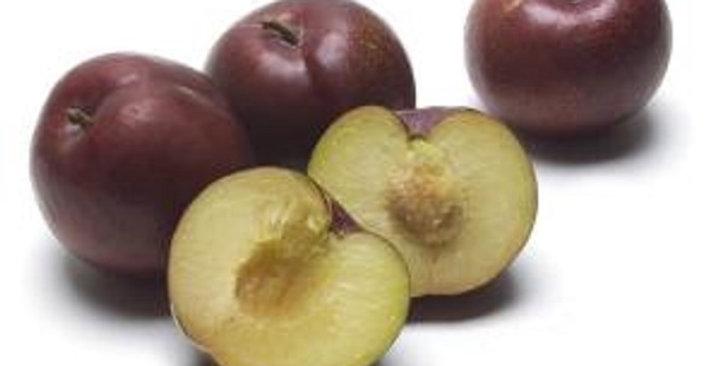Plumcots (Sweet Treat)