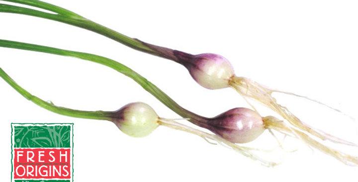 Tiny Veggies™ (Onion, Purple)