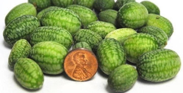 Organic Cucumbers (Watermelon)